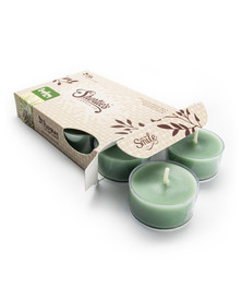 Bayberry Fir Tealight Candles 6-Pack