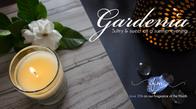 FOTM: Gardenia